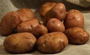 ранний картофель сорт Серпанок семенной