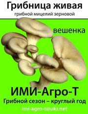 Мицелий грибной зерновой и на брусочках