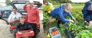 Сезонная работа в Финляндии. Работа на ферме. Сбор клубники,  малины,  черники,  брусники.