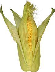 Продам семена кукурузы производство Польша