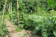 Сетка огуречная зеленая