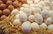 Яйцо куриное,  С1,  белое и коричневое.Экспорт,