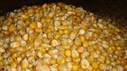 Продаем кукурузу