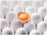 Яйцо куриное,  С0,  C1,  C2,  крупный опт,  только Украина