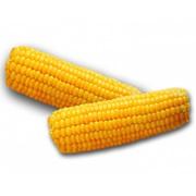 Закуповуємо кукурудзу з будь-якою вологістю