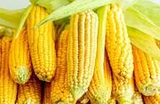 Куплю кукурузу,  любые объемы