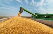 Куплю зерновые дорого . Самовывоз