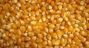 Куплю зерновые в Украине