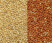 Закупаю зерновые по территории Украины